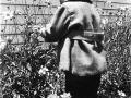 Clark_picking_daisies_at2yrs-sm.jpg