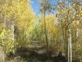 Grand Mesa autumn1.jpg