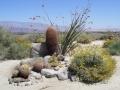 Borrego_Desert_Flowers-sm.jpg