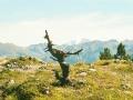 The Alps-sm.jpg